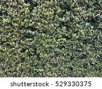 green leaf wall background | Shutterstock . vector #529330375