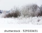 Winter Landscape With Trees An...
