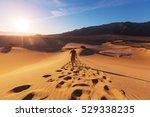 hiker in sand desert. sunrise... | Shutterstock . vector #529338235