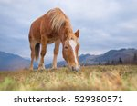 horse eating grass in the... | Shutterstock . vector #529380571