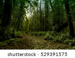 Ancient Rain Forest In...