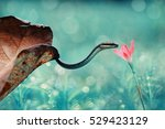 Snake  Snake With Flowers ...