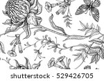 exotic flowers and butterflies. ... | Shutterstock .eps vector #529426705