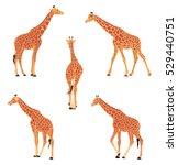 giraffe cartoon. colored vector ... | Shutterstock .eps vector #529440751