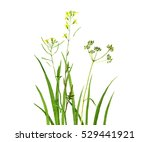 watercolor drawing green grass...   Shutterstock . vector #529441921