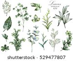 big set watercolor elements  ... | Shutterstock . vector #529477807