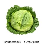 savoy cabbage isolated without... | Shutterstock . vector #529501285