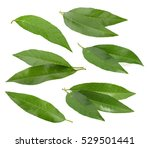 peach leaves isolated on white... | Shutterstock . vector #529501441