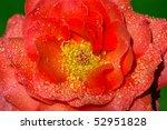wild rose | Shutterstock . vector #52951828