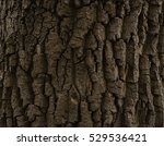 Brown Bark Of A Tree  A 300...