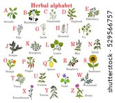 herbal alphabet  herbs and... | Shutterstock .eps vector #529566757