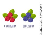 cranberry and blueberry... | Shutterstock .eps vector #529566817