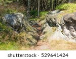 mountain path in forest in the... | Shutterstock . vector #529641424