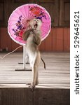 Macaques In Circus Fashion...