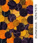colorful leaves texture.... | Shutterstock . vector #529675375