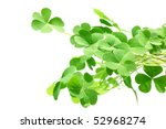 Clover Leaf Isolated On A White