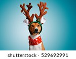 close up portrait of funny... | Shutterstock . vector #529692991