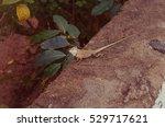 Cute Small Lizard On The Wall