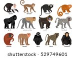 big set of different monkeys