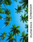 Idyllic Green Tropical Palm...