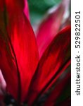 red petals   tropical exotic... | Shutterstock . vector #529822501
