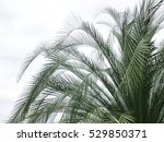 palm tree on sky background | Shutterstock . vector #529850371