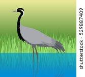 demoiselle crane vector. water... | Shutterstock .eps vector #529887409