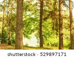 Sunny Forest On The Shore Of ...