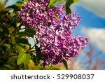 lilac  | Shutterstock . vector #529908037