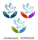 pigeon of peace flying from... | Shutterstock .eps vector #529943239