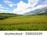 Rice Fields On Terraced Of Sap...