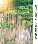 Bamboo In Garden.style Vintage...