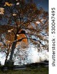 reflection of an orange brown... | Shutterstock . vector #530047495