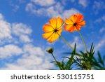 yellow flower on blue sky... | Shutterstock . vector #530115751
