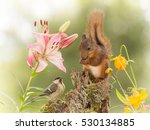 Stock photo close up of titmouse standing on a trunk with flowers with a red squirrel watching 530134885