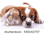 Stock photo dog and rabbit together animal friends sibling rivalry rabbit bunny pet white fox rex satin real 530142757
