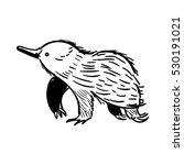 australian animal echidna in...