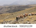Small photo of DAMAVAND MOUNTAIN, IRAN - October 4, 2016: DAMAVAND mountain -the highest peak of Iran, man going up, leading a caravan of horses at the altitude of 4000 m, Iran on October 4, 2016