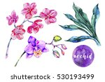 tropical flowers  orchid ... | Shutterstock . vector #530193499