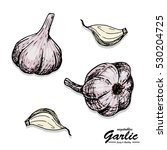 color garlic in sketch style.... | Shutterstock .eps vector #530204725
