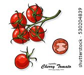 colorful cherry tomato in... | Shutterstock .eps vector #530204839