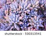Cactus Succulent Garden Desert...