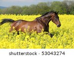 Malapolski Horse Running In Th...