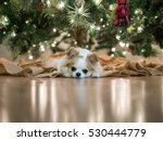 Stock photo innocence looking chihuahua puppy laying down by decorated bright christmas tree with copy space 530444779
