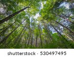 looking up at a canopy of trees.... | Shutterstock . vector #530497495