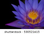 Close Up Of A Blue Water Lily