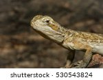 a close up of an agamous | Shutterstock . vector #530543824