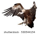 Vulture Landing Isolated