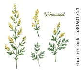 hand drawn watercolor botanical ... | Shutterstock . vector #530601751