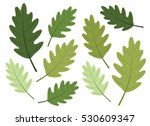 oak tree leaves in green | Shutterstock .eps vector #530609347